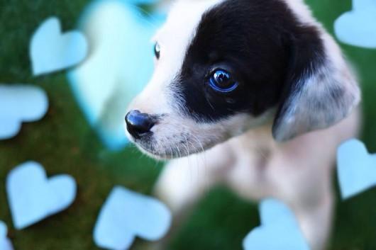Cão disponível na feira
