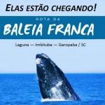 baleia 02