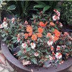 Plantas frutíferas no seu jardim